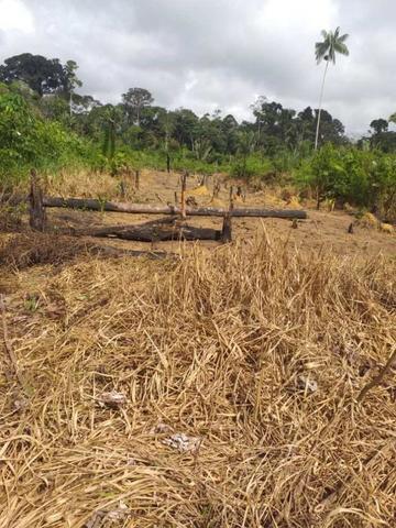 Rondônia: indígenas de aldeia Karipuna denunciam invasão e pedem socorro contra coronavírus - Gente de Opinião