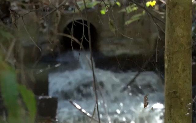 Lixo despejado em córrego causa mortandade de peixes e mau cheiro em Porto Velho - Gente de Opinião