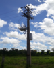 Investimento de R$ 13 milhões reduz tempo de interrupção no fornecimento de energia