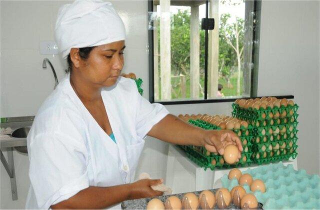 Governo de Rondônia publica decreto que reduz tributos e incentiva a comercialização de ovos