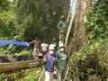 Ação preserva área de manejo sustentável do pirarucu
