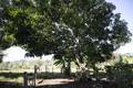 Mais de 5,8 milhões de árvores plantadas em projetos de reflorestamento em Rondônia