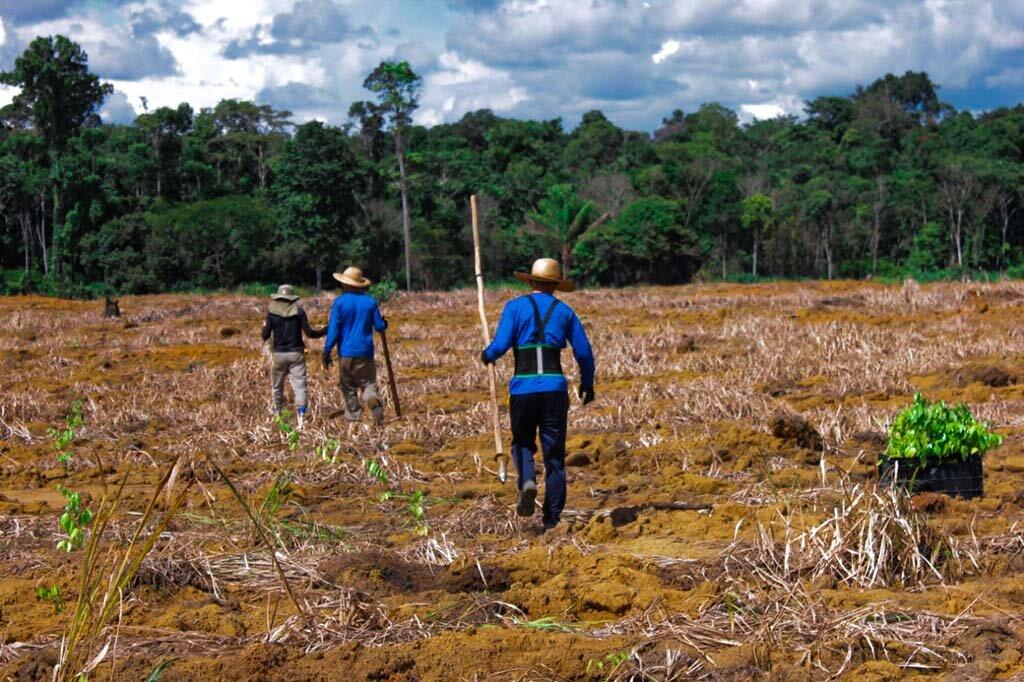Dia da Amazônia - Qual o papel da maior floresta tropical do planeta no combate ao aquecimento global? - Gente de Opinião