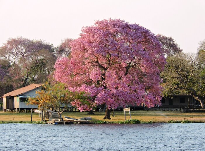 Rio Paraguai, MS