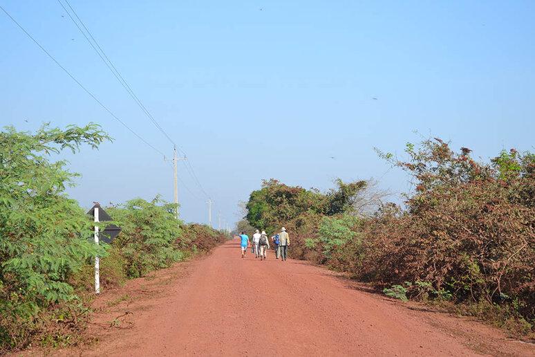 Estrada Boiadeira