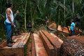 Kanindé lança campanha internacional para salvar a Terra Indígena Uru-eu-wau-wau