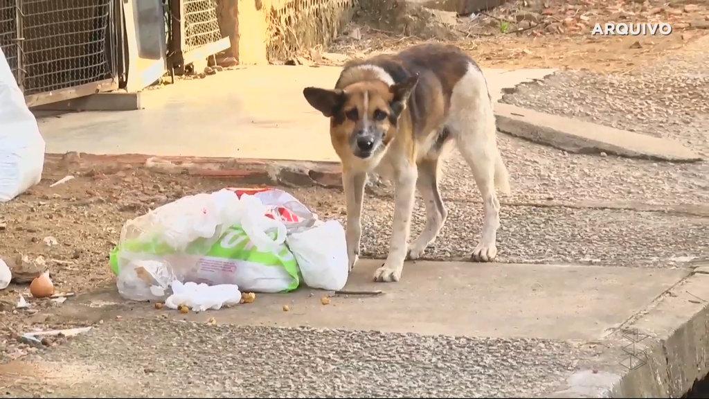 Prefeitura ajuda na castração de animais em Porto Velho (VÍDEO) - Gente de Opinião