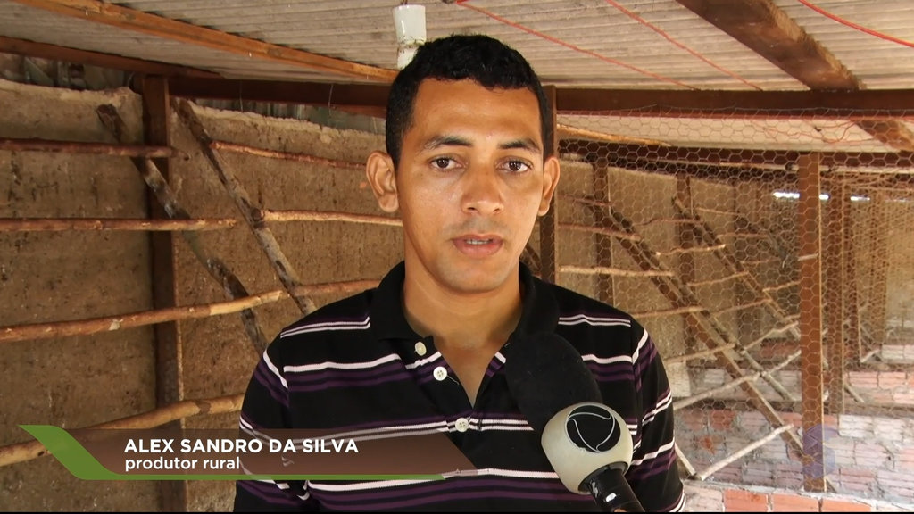 Alex usa chocadeira elétrica para aumentar os rendimentos (VÍDEO) - Gente de Opinião