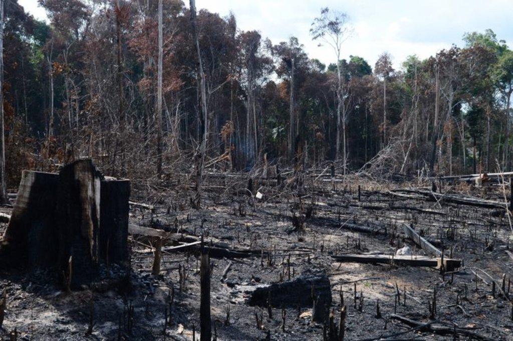 Desmatamento das florestas respondem pela principal fonte de emissão de gases de efeito estufa no país - Arquivo/Agência Brasil - Gente de Opinião