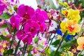 O registro de plantas e flores ornamentais será debatido no Senado