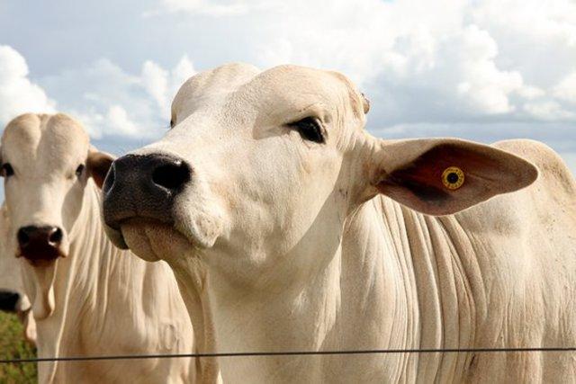 Cargill Nutrição Animal lança tecnologia inédita para acabamento de carcaça - Gente de Opinião