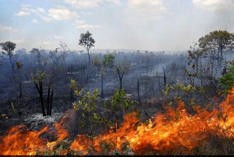 Florestas na Amazônia pós-fogo demoram sete anos para recuperar funções