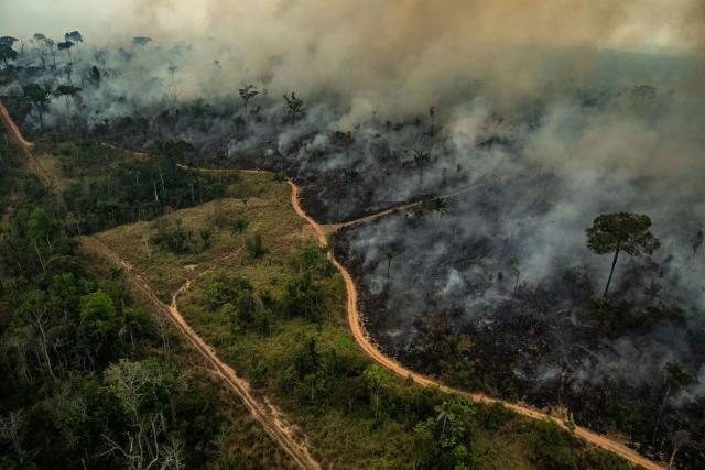 A Amazônia pode desaparecer como floresta e isso vai impactar o mundo todo - Gente de Opinião
