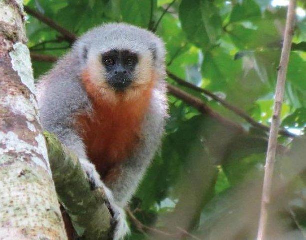 """O Programa """"Tatiana de Carvalho"""" de Pesquisa e Conservação da Biodiversidade da Amazônia tem prazo de inscrição  - Gente de Opinião"""