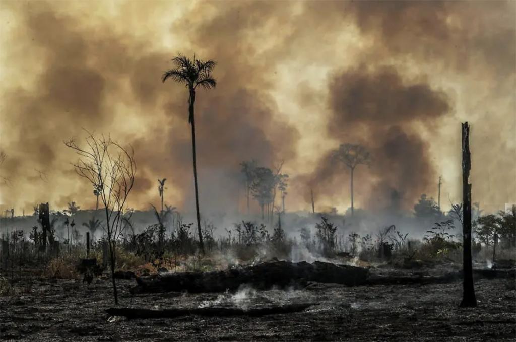Pandemia não detém o desmatamento. Professores e acadêmicos debatem o tema em videoconferência da Uniron - Gente de Opinião