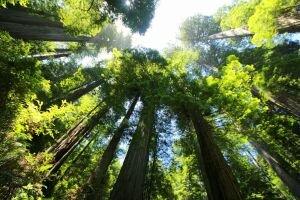 Dia de Proteção às Florestas: áreas de conservação são aliadas no combate ao desmatamento - Gente de Opinião