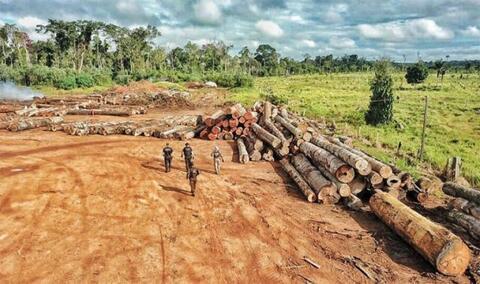 OPERAÇÃO BERTHOLLETIA:  PF desmonta organização criminosa de exploração ilegal de madeira