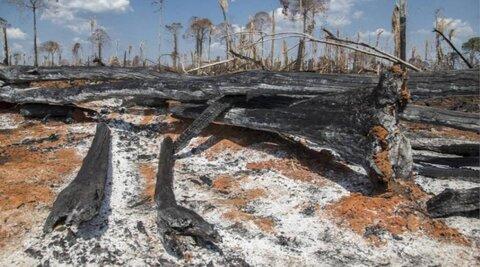 Fogo em área recém-desmatada na Amazônia disparou em 2019