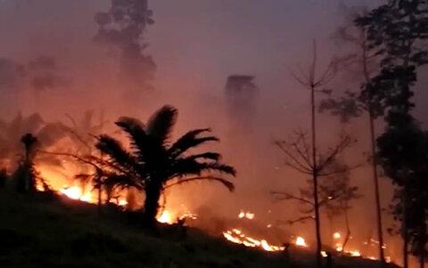 MP monta força-tarefa para reduzir desmatamento em Rondônia