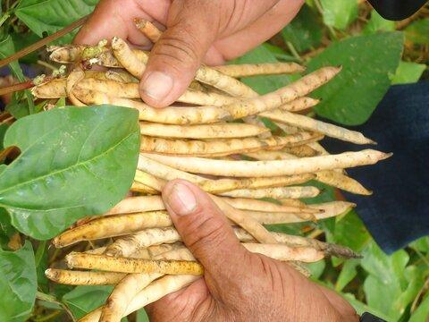 Qual é a participação da agricultura familiar na produção de alimentos no Brasil e em Rondônia?