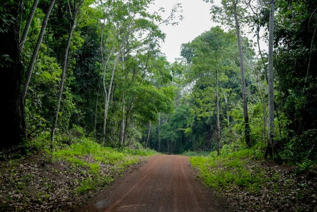 Rondônia ingressará na economia verde em 2021, a partir da organização de extrativistas da Resex Rio Cautário - Fotos: Frank Néry - Gente de Opinião