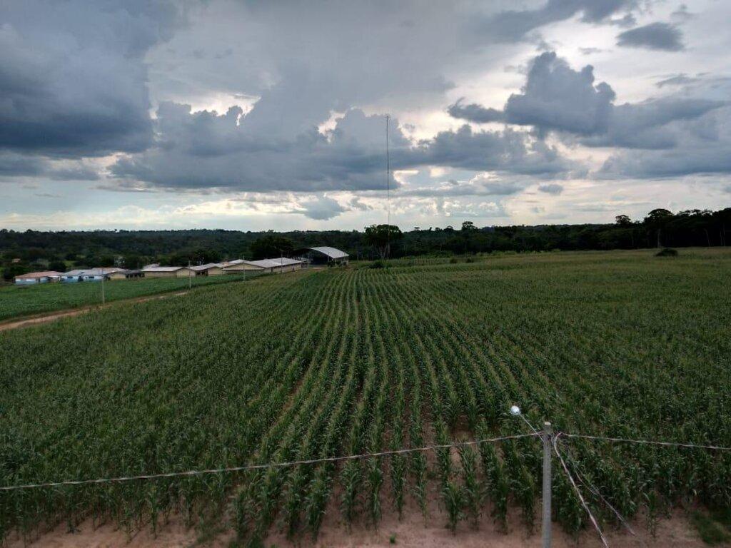 Com uma área de cultivo de milho de sete hectares, os alunos aprendem as técnicas de produção de silagem - Gente de Opinião