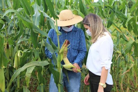Prefeita de Ariquemes visita produtor de silagem de milho e criador de gado leiteiro