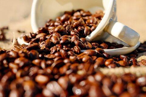 Fazenda em Novo Horizonte do Oeste é premiada em concurso de café e mostra força do produto em Rondônia