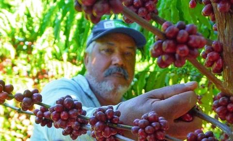 Embrapa lança documentário sobre a produção de café Robusta fino em terroir Amazônico