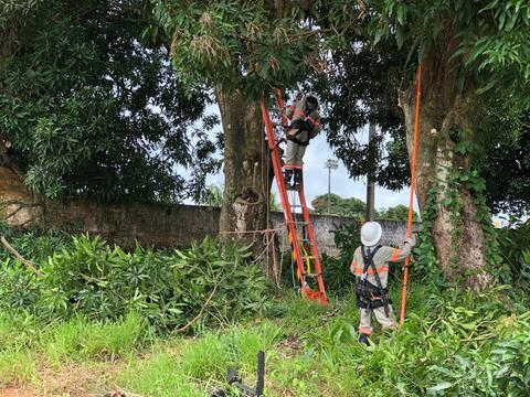Plantio de árvores em locais adequados contribui para qualidade de energia