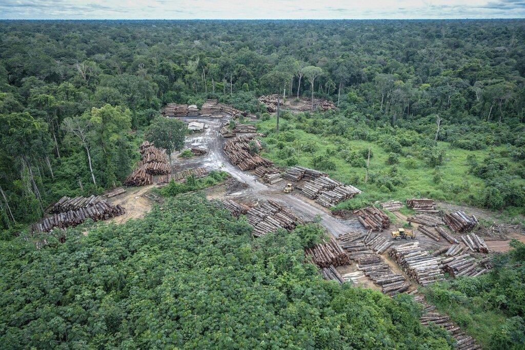 Leis federais e estaduais estimulam invasão de terras públicas e desmatamento na Amazônia, aponta novo estudo - Gente de Opinião