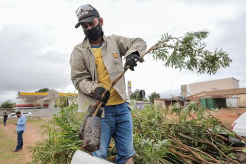 Programa APP Viva inicia plantio de mudas às margens do Igarapé da Penal em Porto Velho