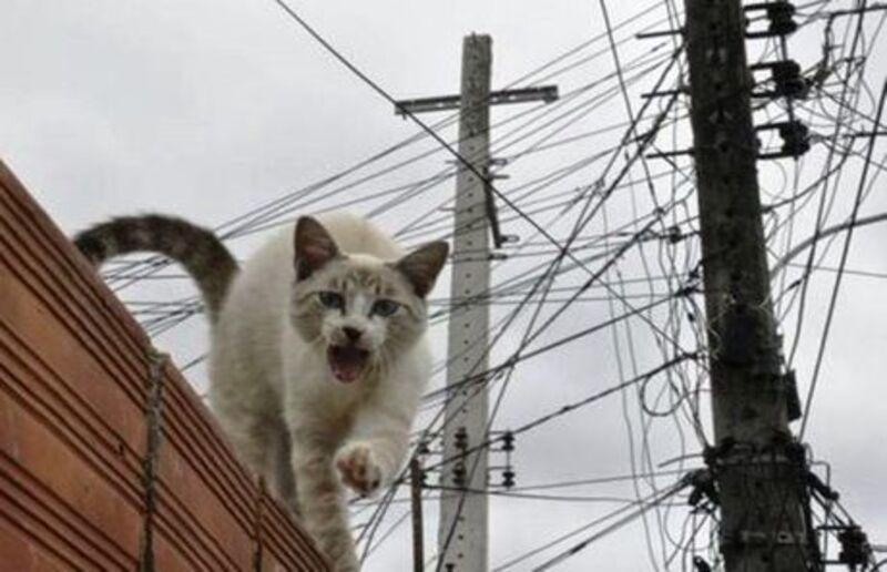 Furtar, fraudar ou não a energia elétrica, eis a questão!