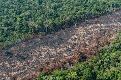 Primeira lei fundiária de Rondônia foi aprovada em 2020; estado tem quase 30% de terras não destinadas