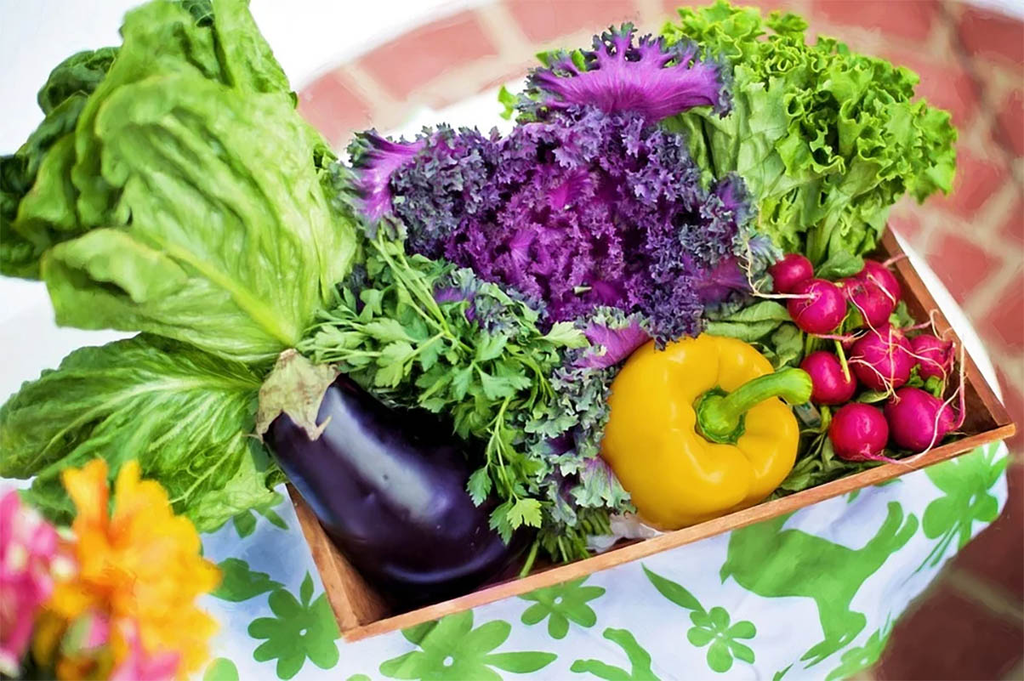 https://pixabay.com/pt/photos/produtos-hort%C3%ADcolas-jardim-colheita-790022/ - Gente de Opinião