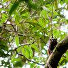 17 de julho: Dia de Proteção às Florestas