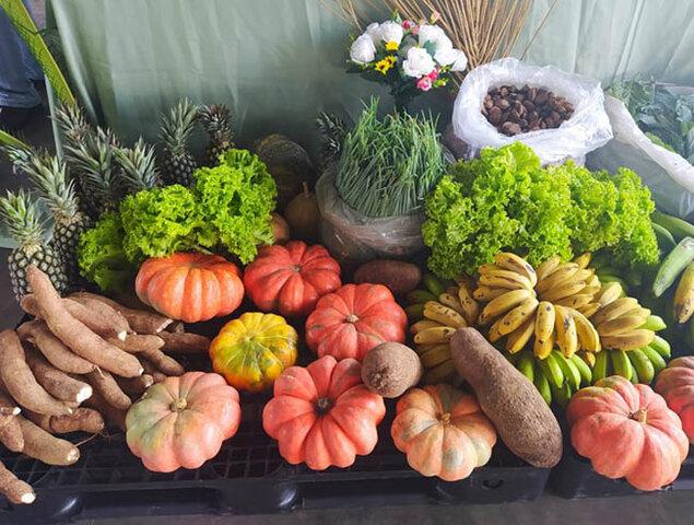 Exército vai comprar 77 produtos próprios da Agricultura Familiar, como frutas, legumes, polpas de frutas, entre outros - Gente de Opinião