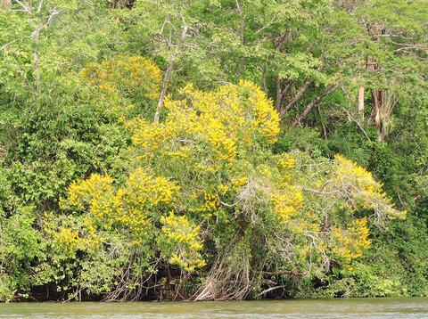 A Terceira Margem – Parte CCLXVII - Expedição Centenária Roosevelt-Rondon 2ª Parte – VII  Ilha da Amizade – Tapirapuã I