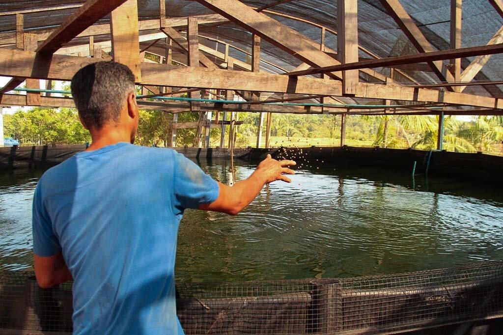 Criação de tambaqui é destaque em Rondônia - Gente de Opinião