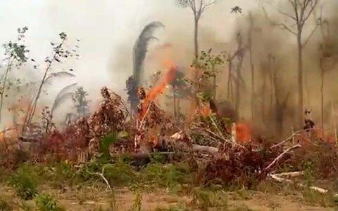Queimadas ameaçam vida de animais selvagens em Rondônia
