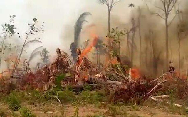 Queimadas ameaçam vida de animais selvagens em Rondônia - Gente de Opinião