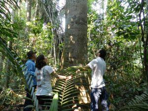 Dia da Árvore e o papel das empresas na responsabilidade ambiental - Gente de Opinião
